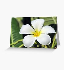 Aromatic Champa Greeting Card