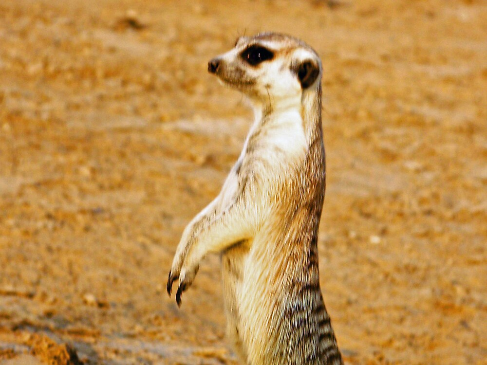 Meercat On the Alert by tj107
