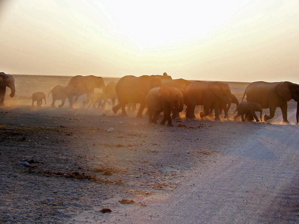 Elephants walking by tj107