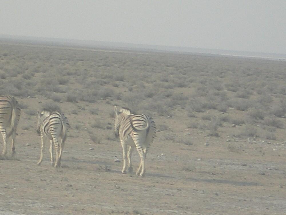zebra scared by mj007