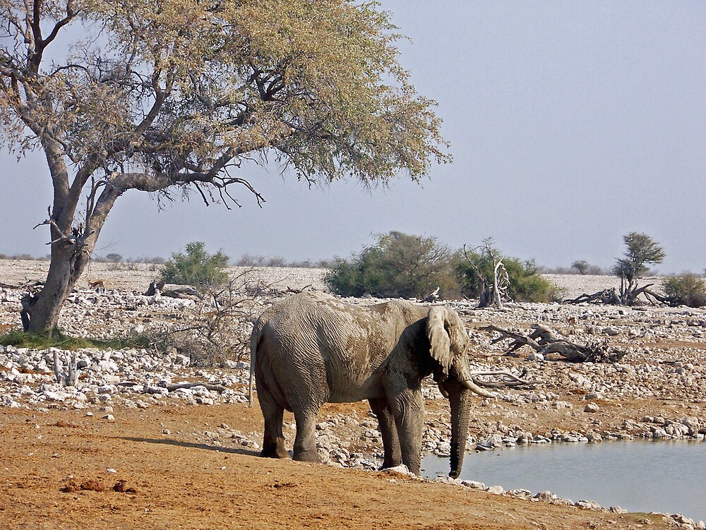 Elephant by a waterhole by tj107