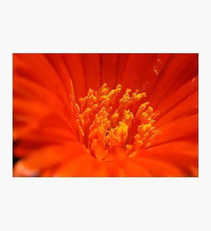 Flaming Nectar Photographic Print