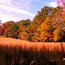 """""""A Peaceful Fall Day in Georgia""""... prints and products by Bob Hall©"""