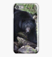 Ursus americanus iPhone Case/Skin