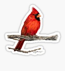 Male Northern Cardinal Wildlife Bird Art Sticker