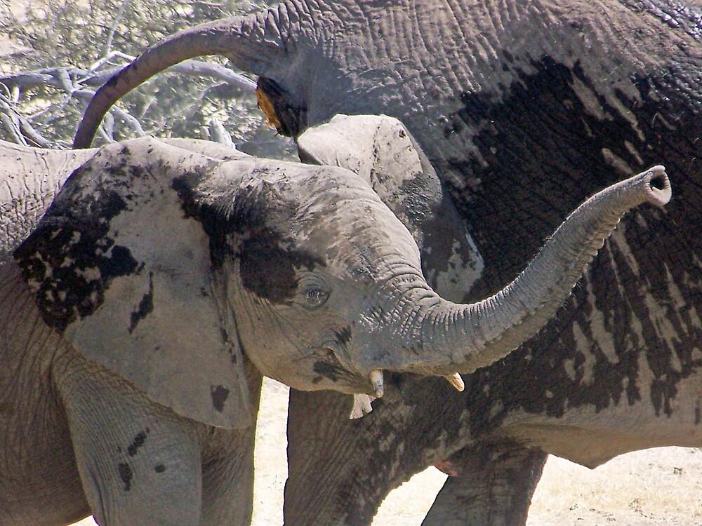 Baby Elephant Trumpetting by tj107