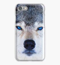 Blue Eyed Wolf  iPhone Case/Skin