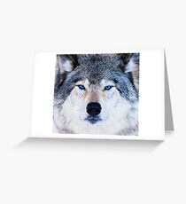 Blue Eyed Wolf  Greeting Card