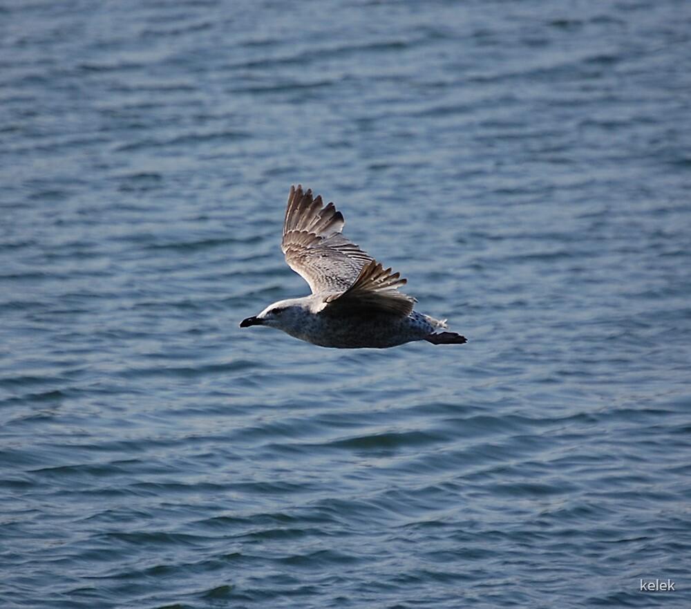 Young Bird by kelek