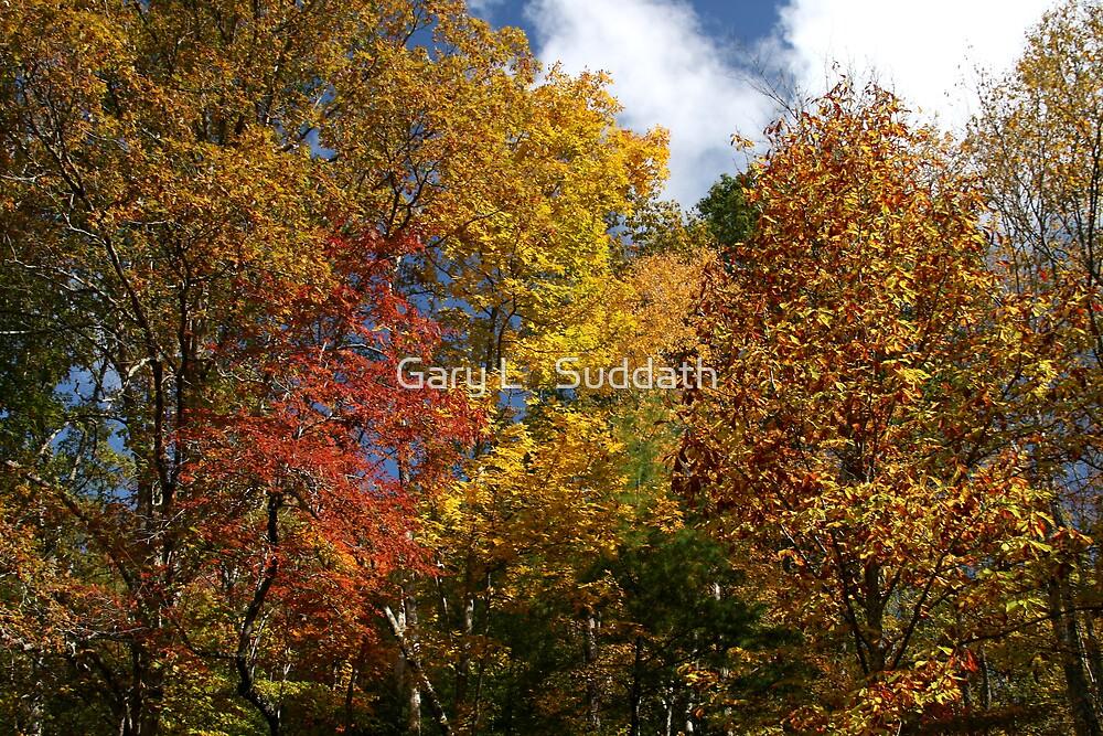 Autumns Splendor II by Gary L   Suddath