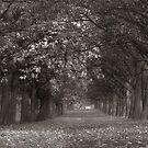 Arboretum Temple Newsam by spemj