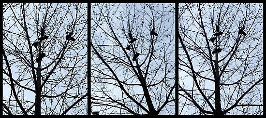 Shoe Tree Triptych by John Douglas
