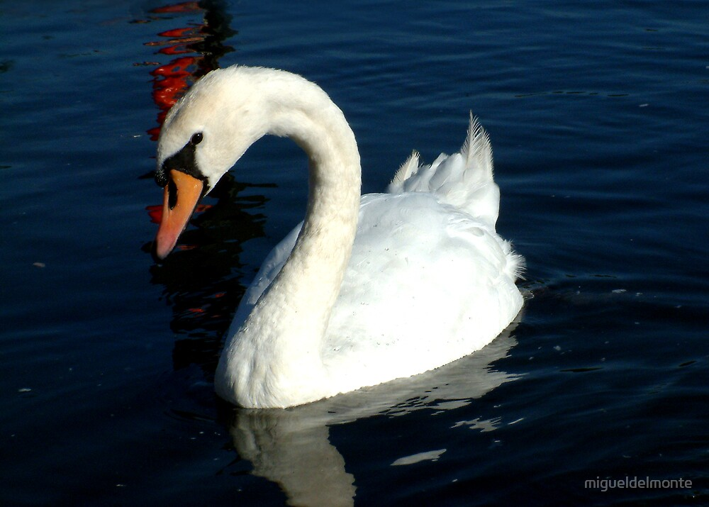 Swan by migueldelmonte