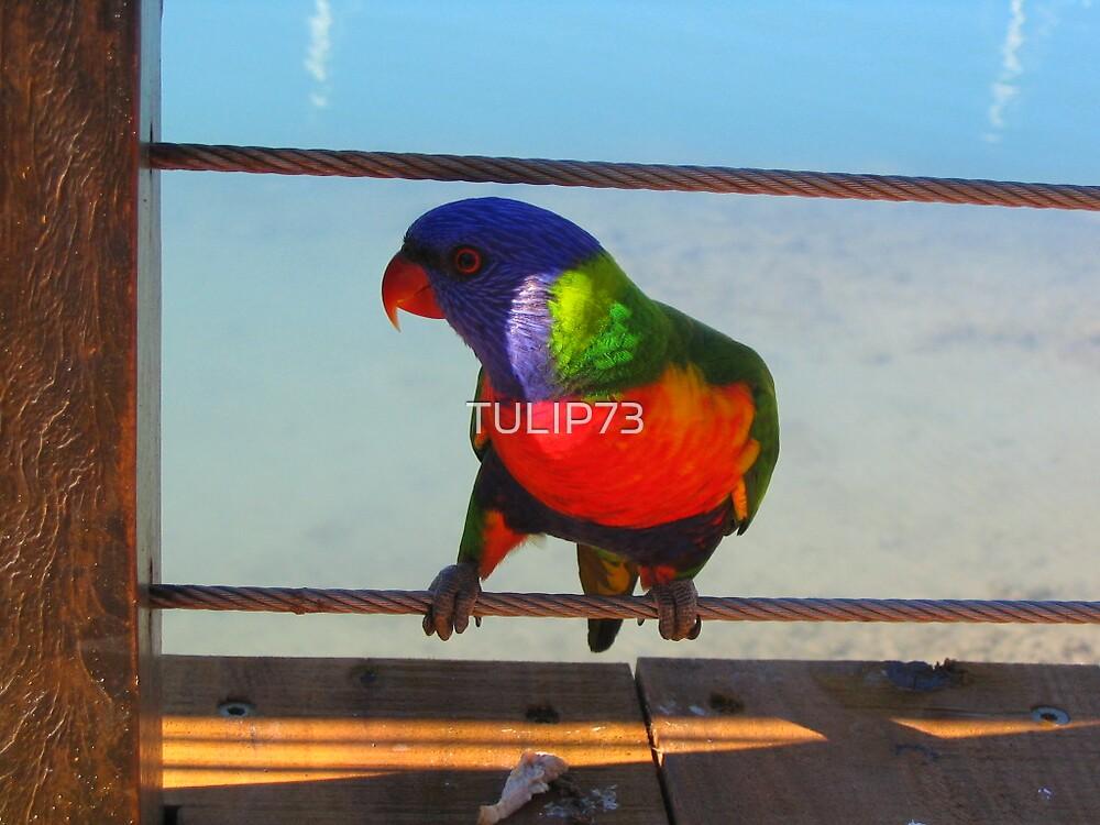 BIRDS by TULIP73