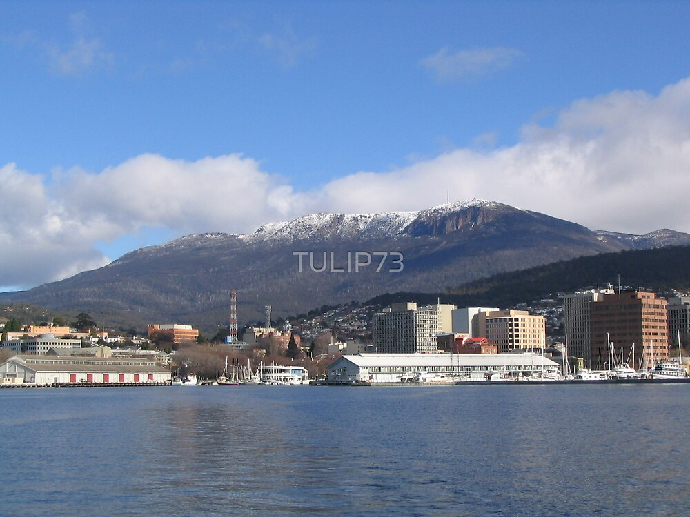 MT WELLINGTON by TULIP73