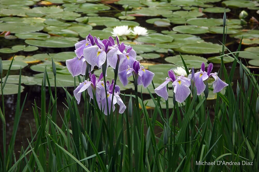 Purple Pond Flowers by Michael D'Andrea Diaz