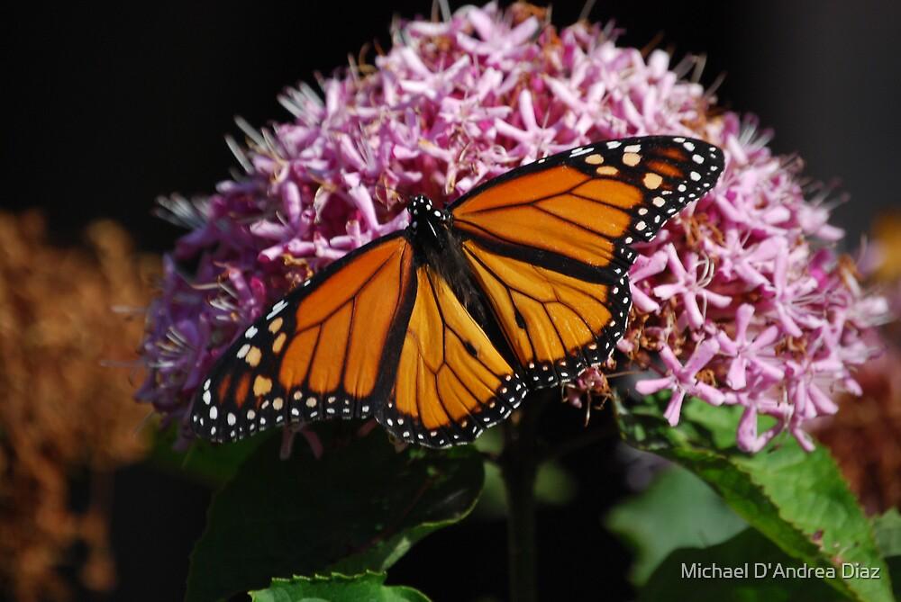 Monarch Butterfly by Michael D'Andrea Diaz