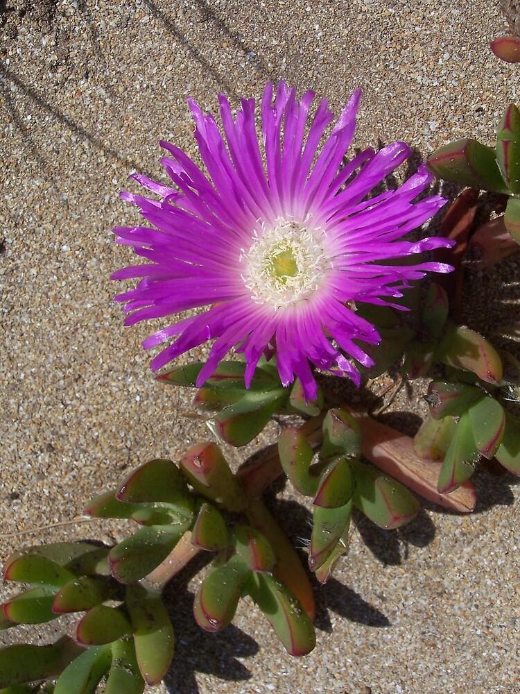 Beach flower by MeganJayne