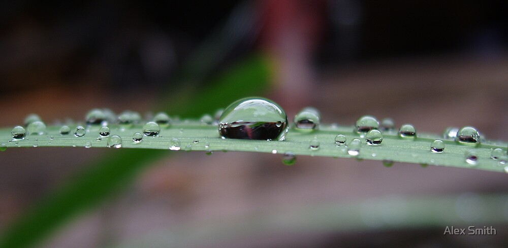 Water droplets by Alex Smith