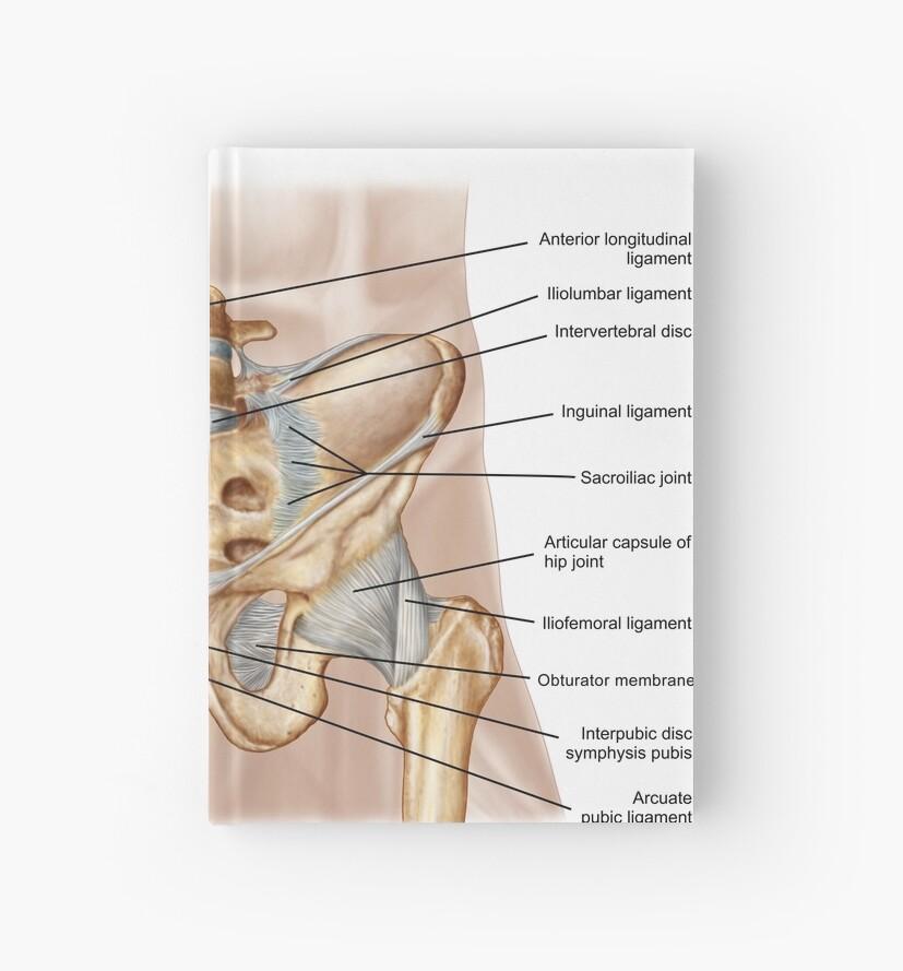 Cuadernos de tapa dura «Anatomía del hueso pélvico humano y ...