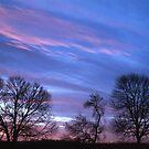 Three Trees by jayobrien