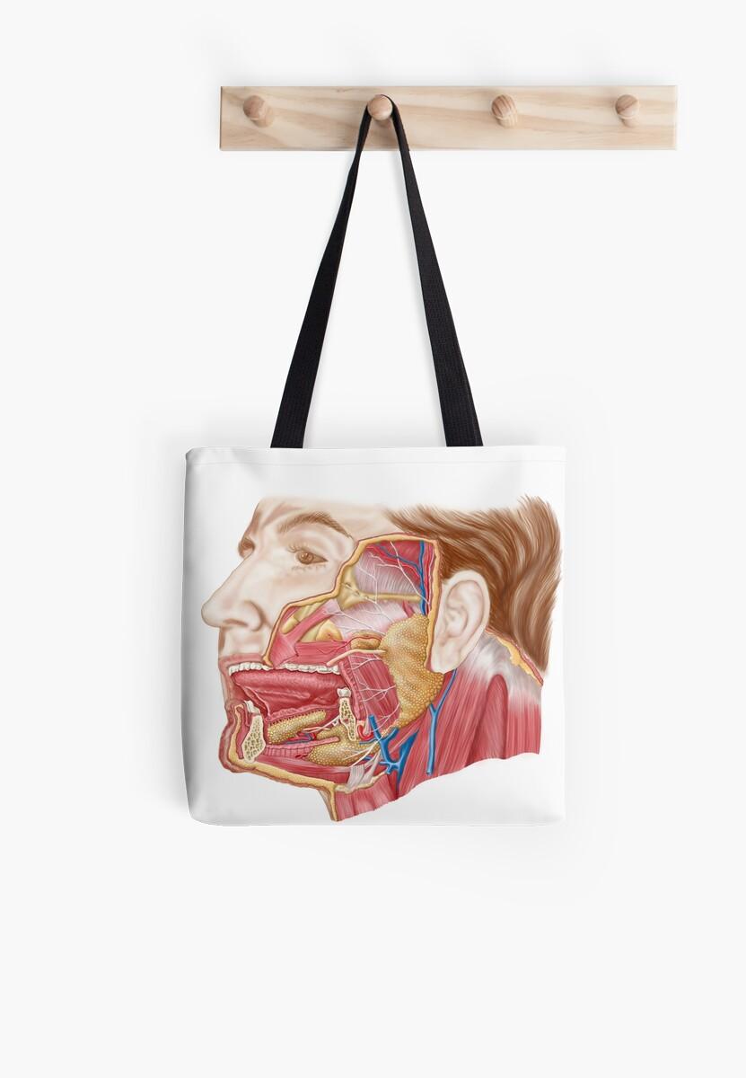 Bolsas de tela «Anatomía de las glándulas salivales humanas.» de ...