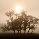 On fire in the fog - Tongala, Victoria, Australia by Norman Repacholi