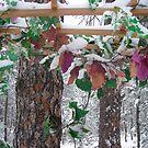 Blanket of Snow by thorskar