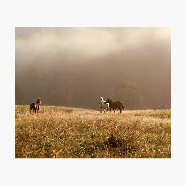 Free Horses Photographic Print