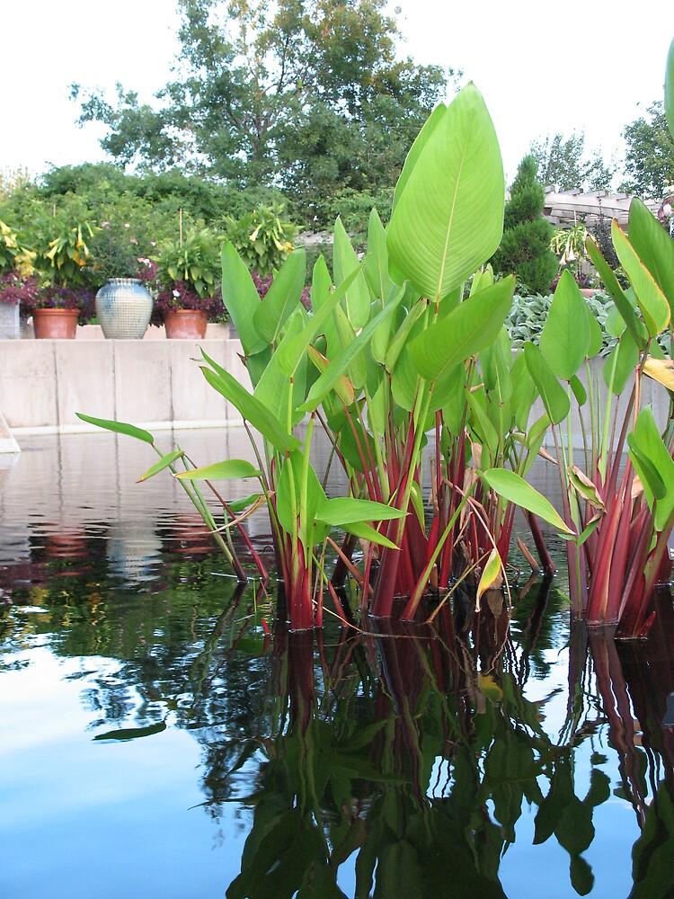 pond reeds by Brynne Kaufmann