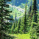 Mount Rainier 589 by jduffy111