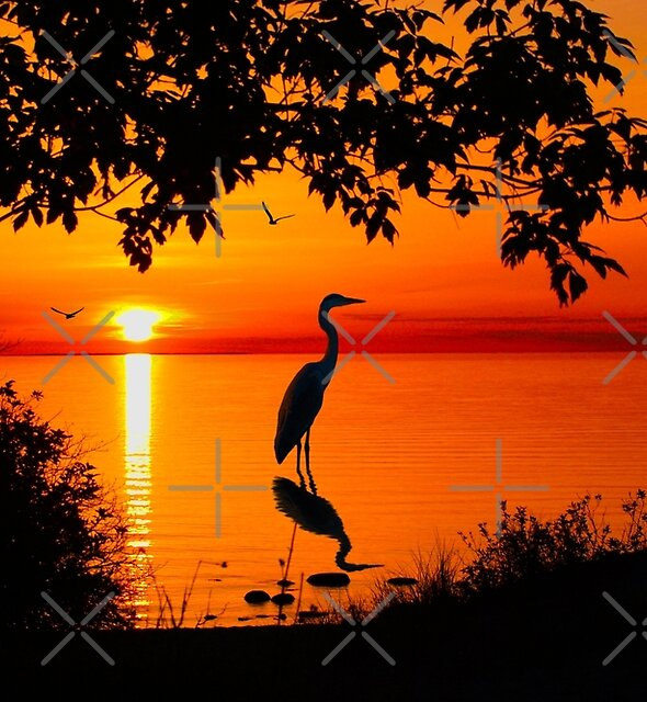 Heron at Sunset  by Megan Noble