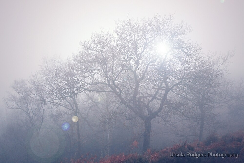 Alive by Ursula Rodgers Photography