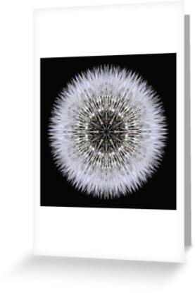 Dandelion Head by David Bookbinder