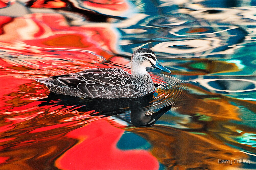 Duck in red water by Barry Culling