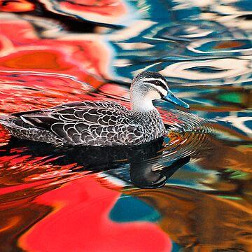 Duck in red water by baji