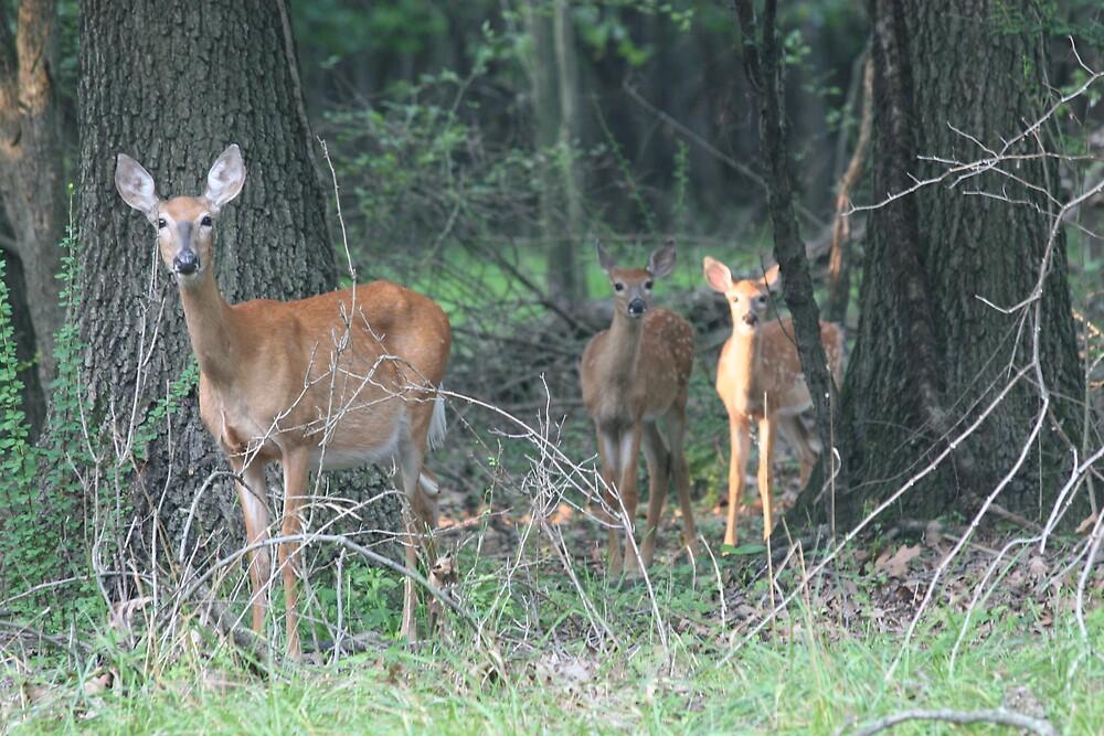 Deer in Woods by KathleenJ