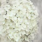 Hydrangea  with textured layers.  by Karen  Betts
