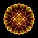Marigold V by David Bookbinder
