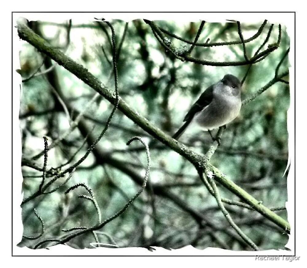 Songbird by Rachael Taylor