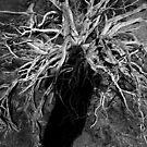 Desert Medusa by GCPhoto