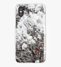 Cardinal in Snowy Winter Scene iPhone Case/Skin