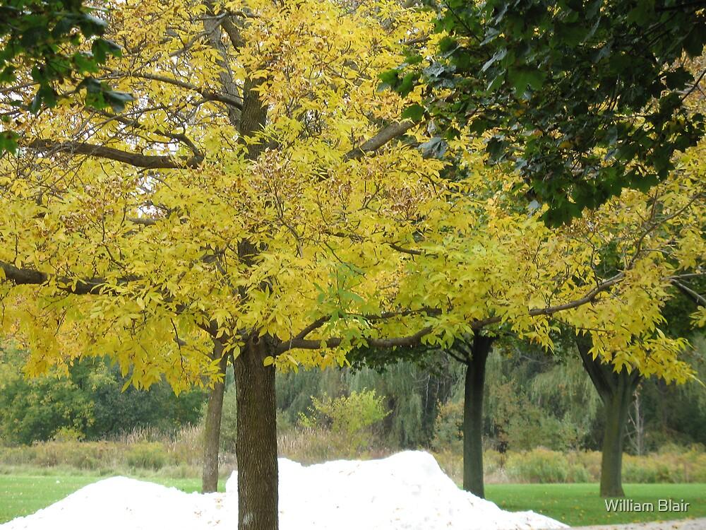 Autumn Snow by William Blair