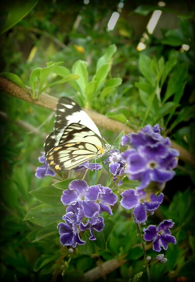 butterfly 1 by kristy  kenning