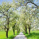 Spring Alley by Walter Quirtmair
