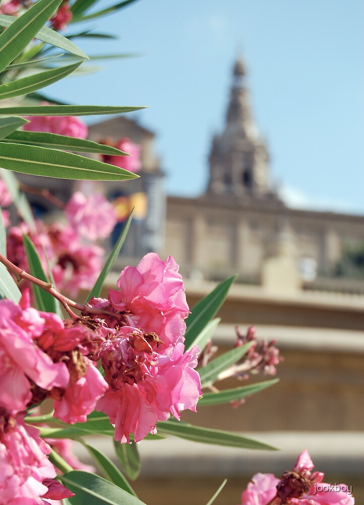 National Art Museum of Catalonia - Flower by jookboy