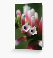Starry Eyed Greeting Card
