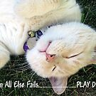 When All Else Fails... by Ruth Palmer
