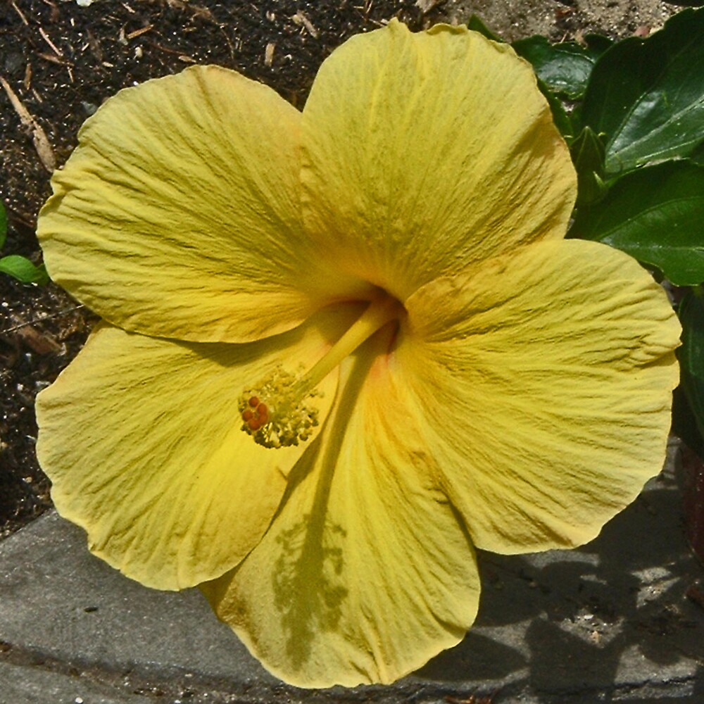 Yellow by Erika Benoit