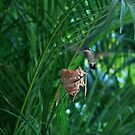 Humming Bird arriving at Nest by tonyphoto